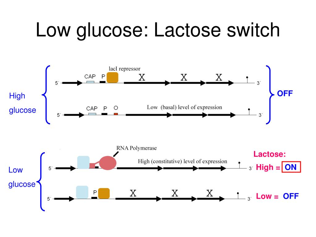Low glucose: Lactose switch