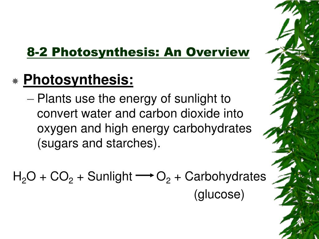 PPT - Chapter 8 Photosynthesis PowerPoint Presentation ...