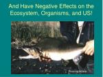 and have negative effects on the ecosystem organisms and us