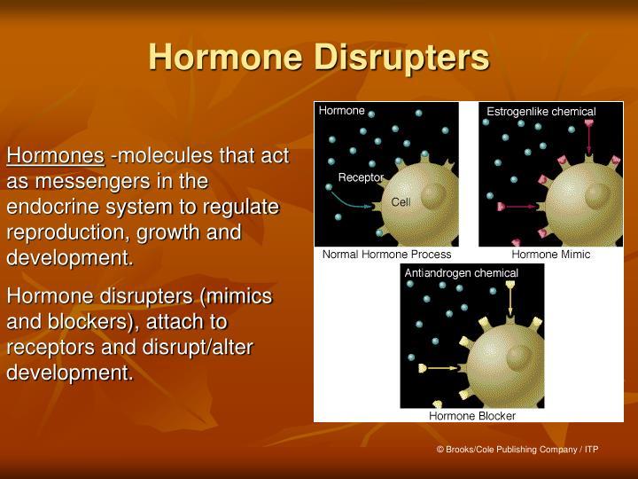 Hormone Disrupters