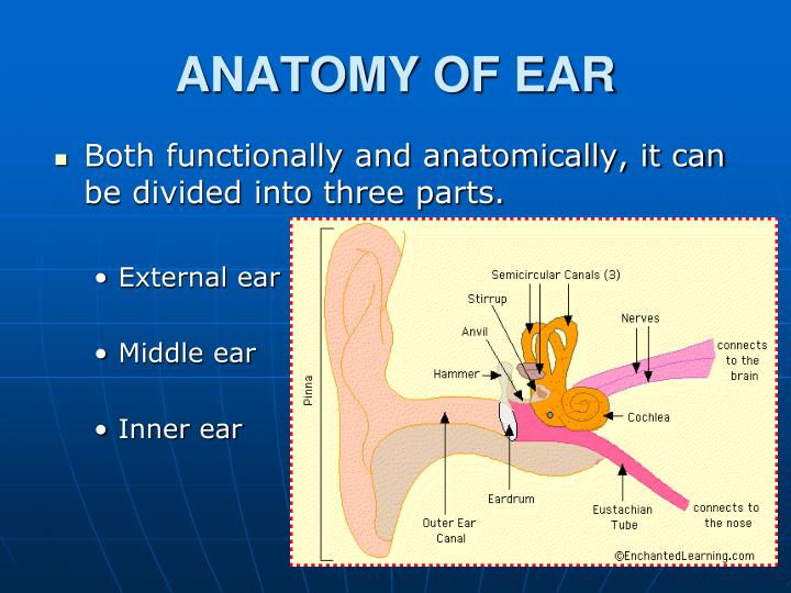 Ppt Congenital Anomalies Of Ear Powerpoint Presentation Id1385026