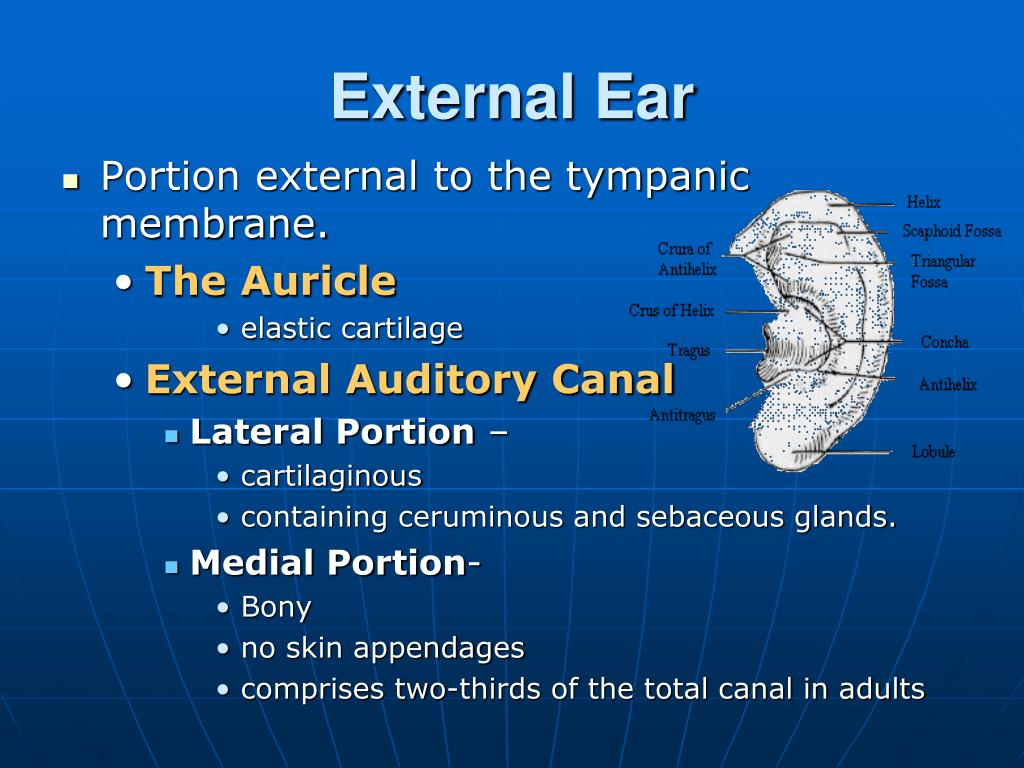 Ppt Congenital Anomalies Of Ear Powerpoint Presentation Free