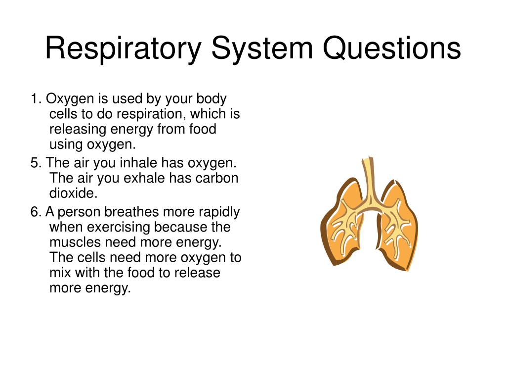 Respiratory System Questions