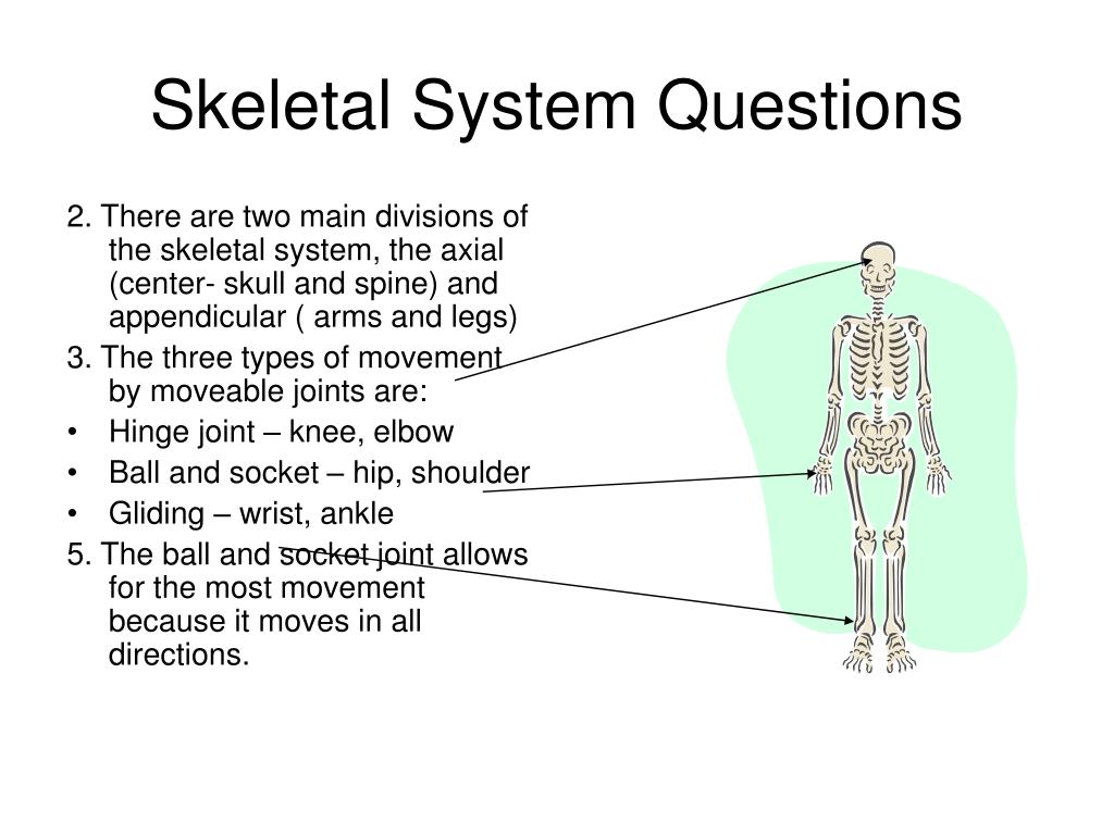 skeletal system questions l.