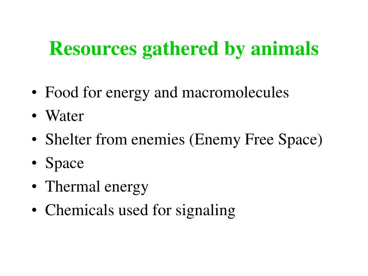 resources gathered by animals n.