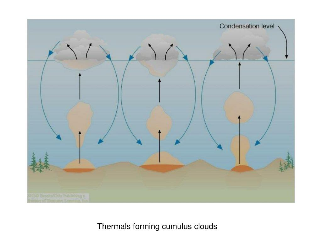 Thermals forming cumulus clouds