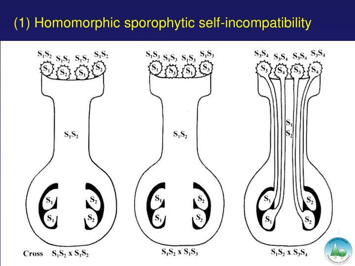 (1) Homomorphic sporophytic self-incompatibility
