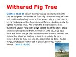 withered fig tree