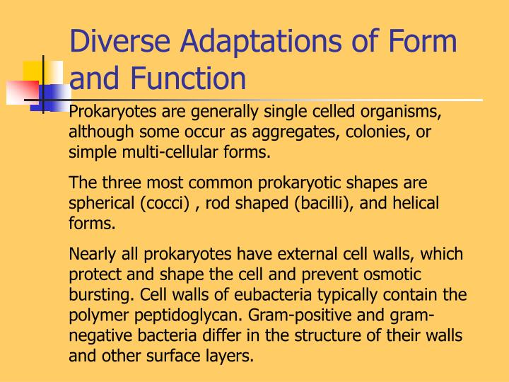 Diverse Adaptations of Form and Function