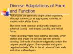 diverse adaptations of form and function2