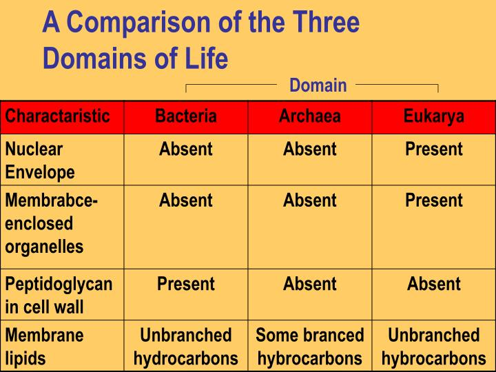 A Comparison of the Three Domains of Life