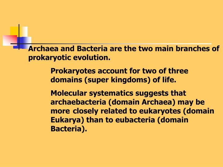 Archaea and Bacteria are the two main branches of prokaryotic evolution.