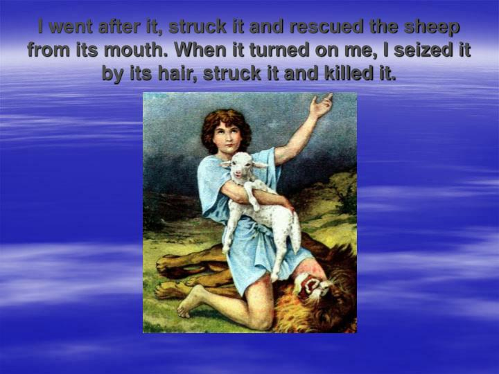 I went after it, struck it and rescued the sheep from its mouth. When it turned on me, I seized it by its hair, struck it and killed it.
