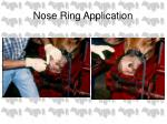 nose ring application3
