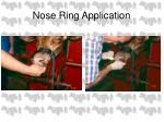 nose ring application4