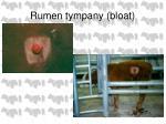 rumen tympany bloat38