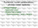 rumenitis rumen parakeratosis chronic rumen acidosis42