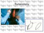 rumenotomy24