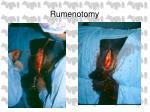 rumenotomy25
