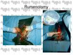 rumenotomy26