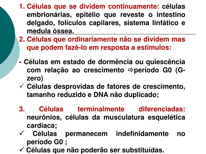 Células que se dividem continuamente: