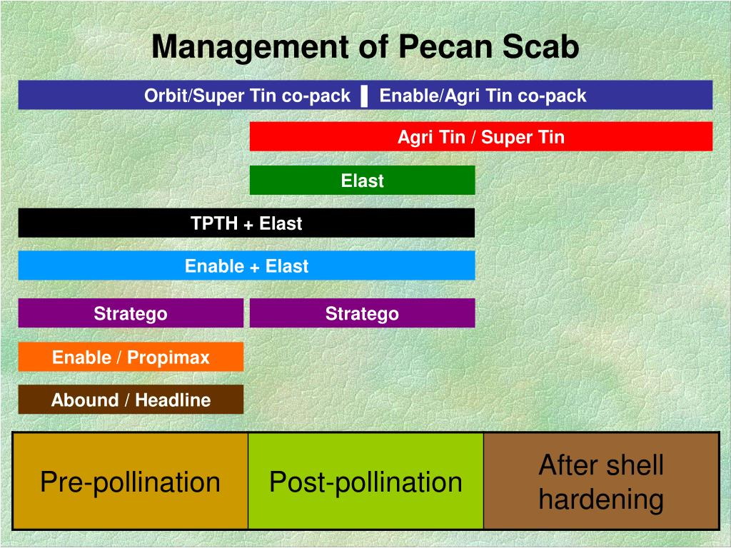 Management of Pecan Scab
