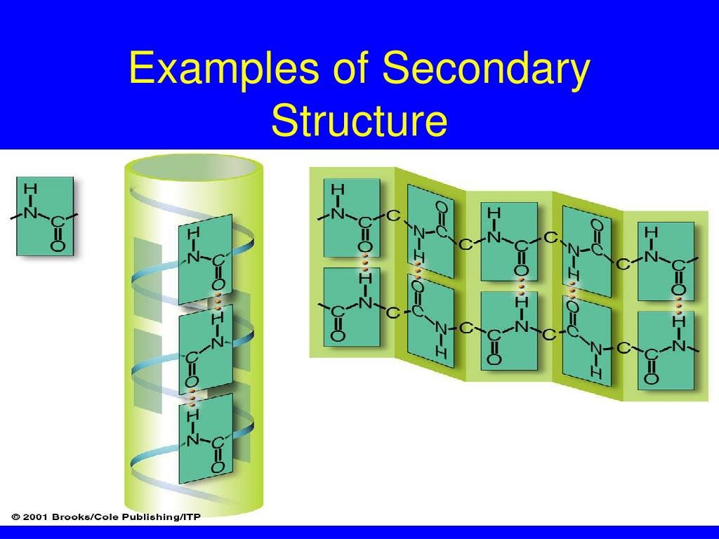 Examples of Secondary Structure