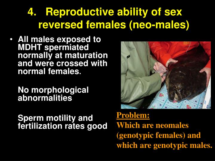 Reproductive ability of sex reversed females (neo-males)