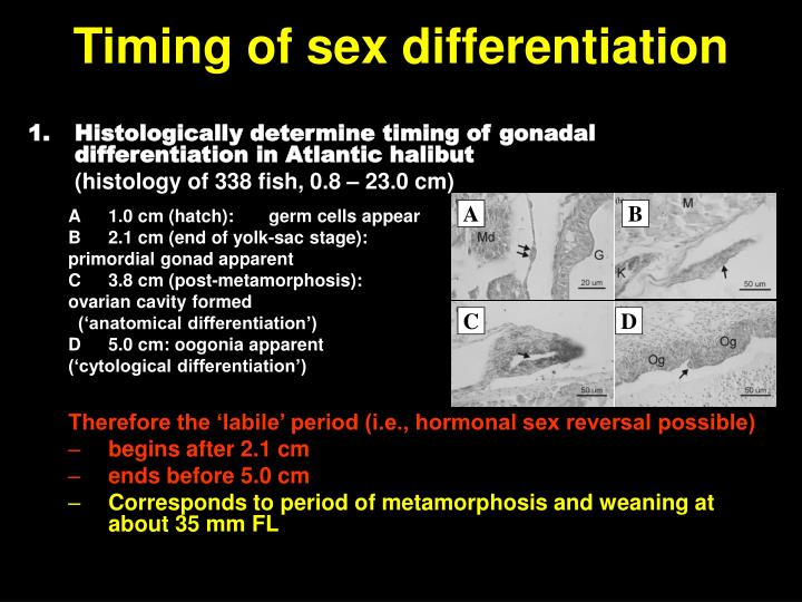 Timing of sex differentiation