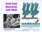 acid fast bacterial cell wall