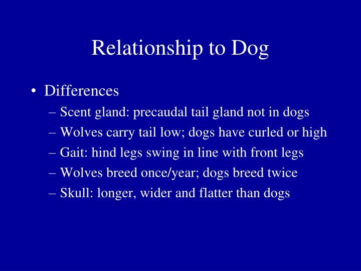 Relationship to Dog