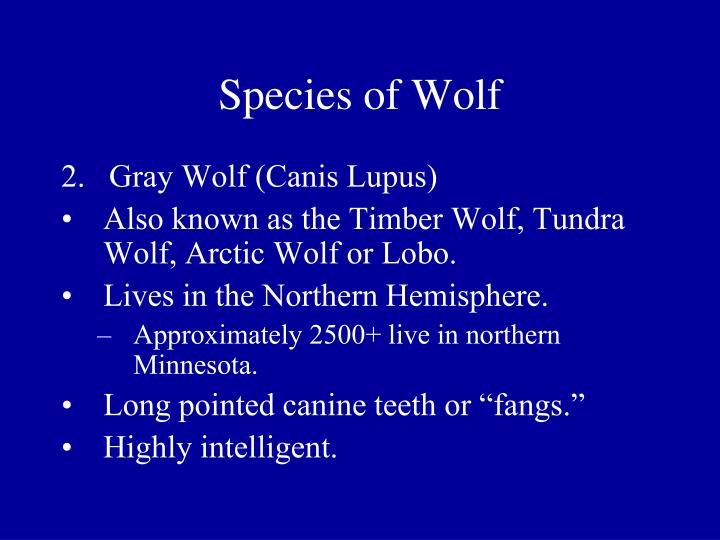 Species of Wolf