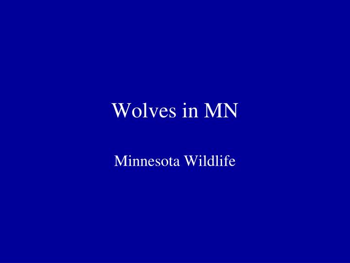 Wolves in mn
