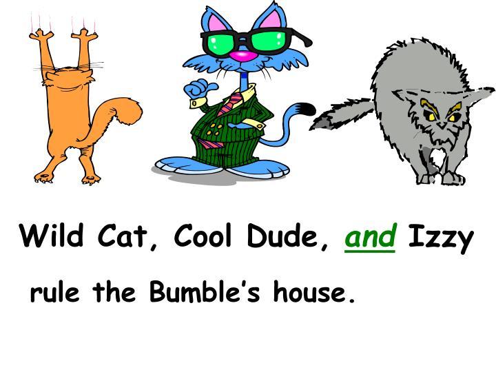 Wild Cat, Cool Dude,