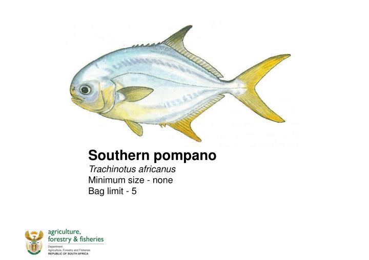 Southern pompano