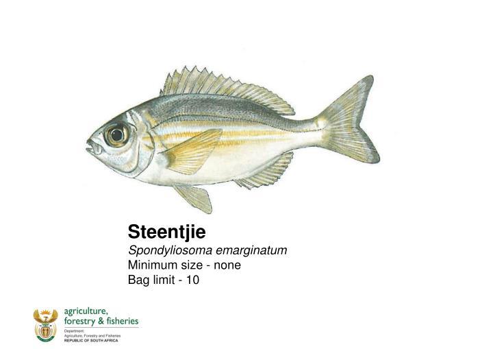 Steentjie