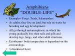 amphibians double life