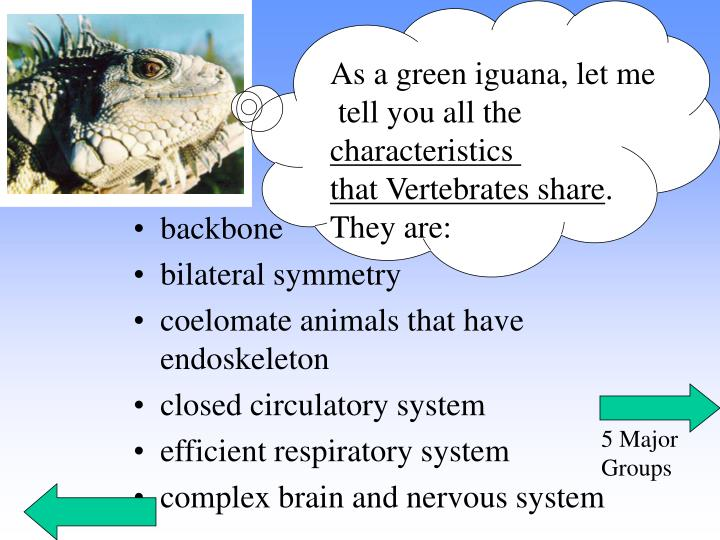 As a green iguana, let me