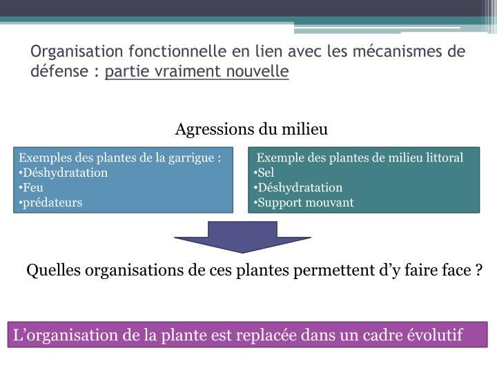 Organisation fonctionnelle en lien avec les mécanismes de défense :