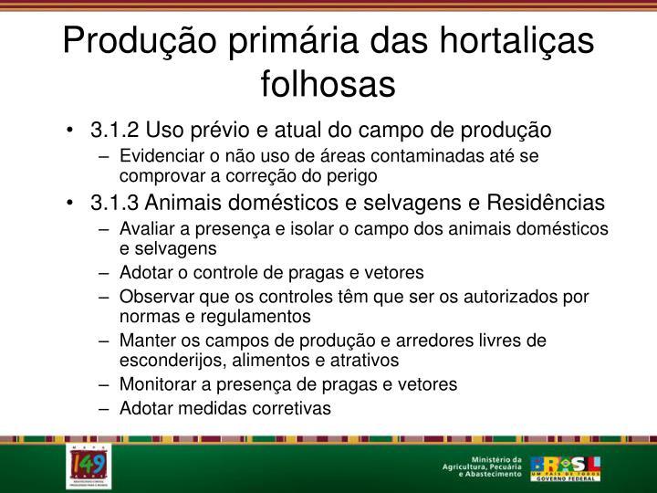 Produção primária das hortaliças folhosas