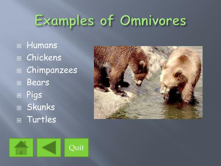 Ppt The Eating Habits Of Animals Powerpoint Presentation Id1397083