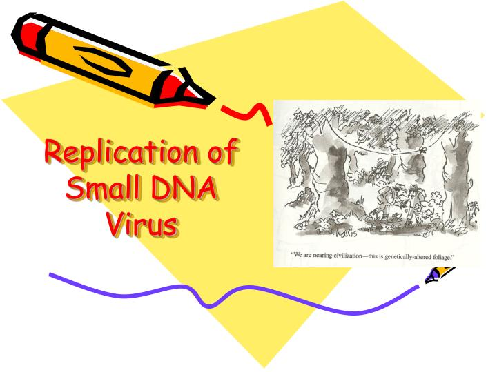 replication of small dna virus n.