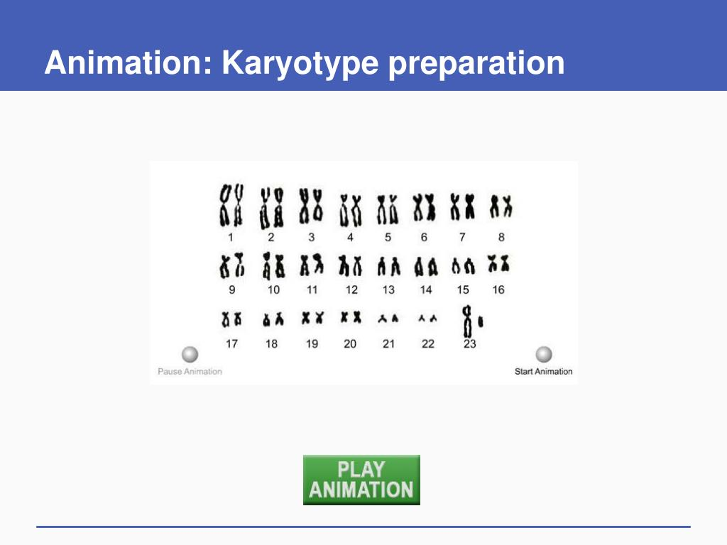 types of sex chromosome mutations animation in Augusta