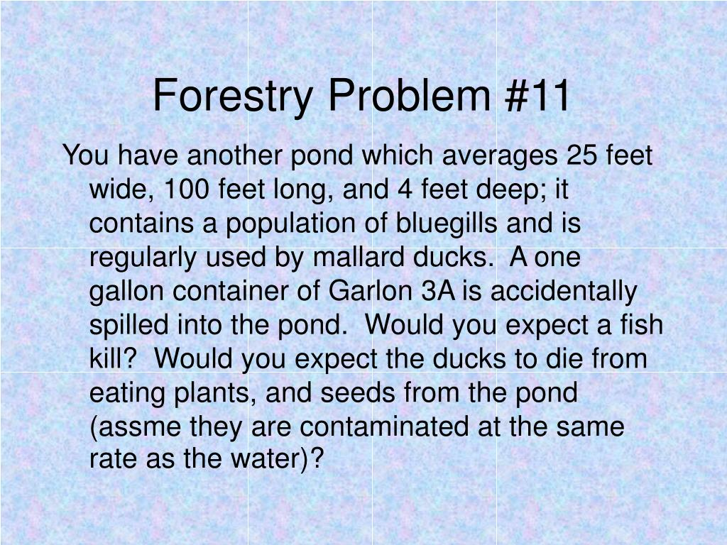 Forestry Problem #11