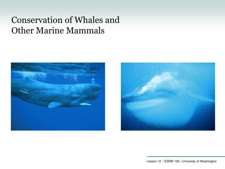 Conservation of Whales and