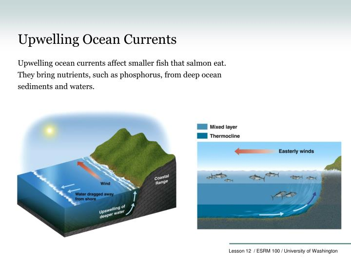 Upwelling Ocean Currents