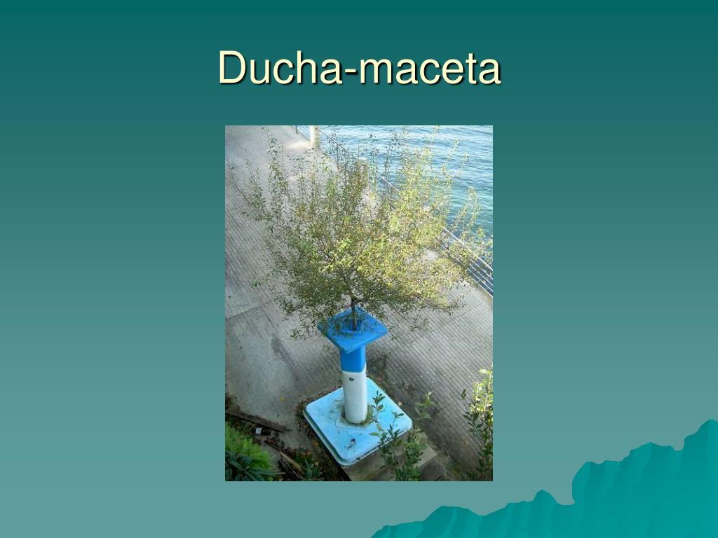 Ducha-maceta