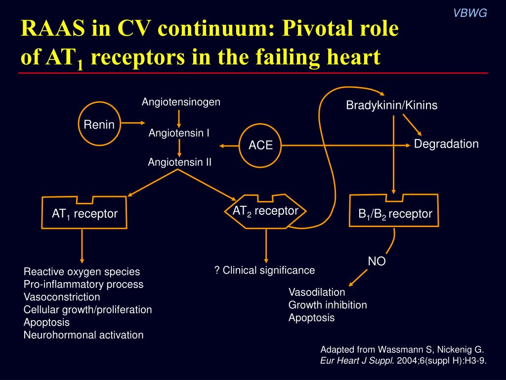 RAAS in CV continuum: Pivotal role