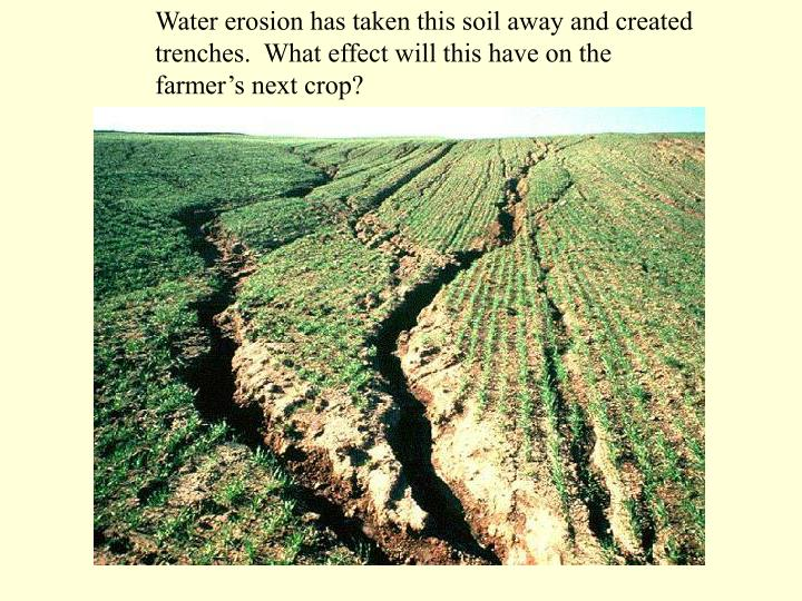 Water erosion has taken this soil away and created trenches.  What effect will this have on the farm...