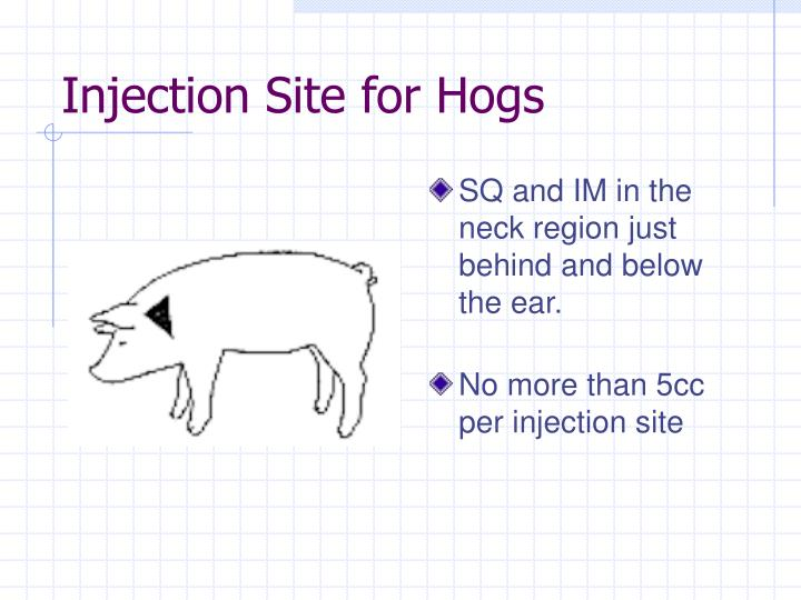 Injection Site for Hogs